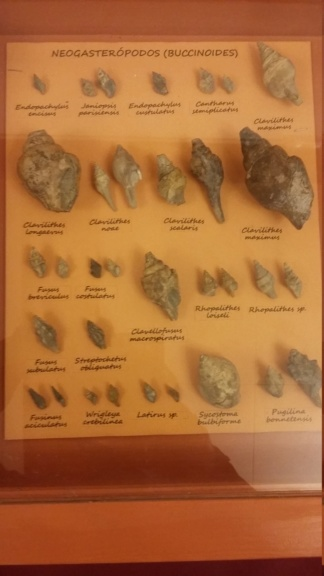 Exposición especies de la transversal pirenaica y algunas cosas más 20181066