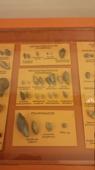 Exposición especies de la transversal pirenaica y algunas cosas más 20181067