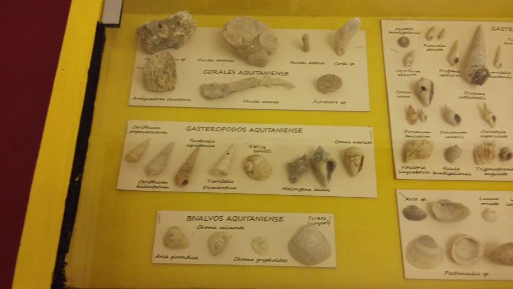 Exposición especies de la transversal pirenaica y algunas cosas más 20181071