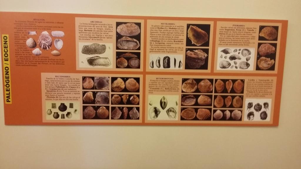 Exposición especies de la transversal pirenaica y algunas cosas más 20181073