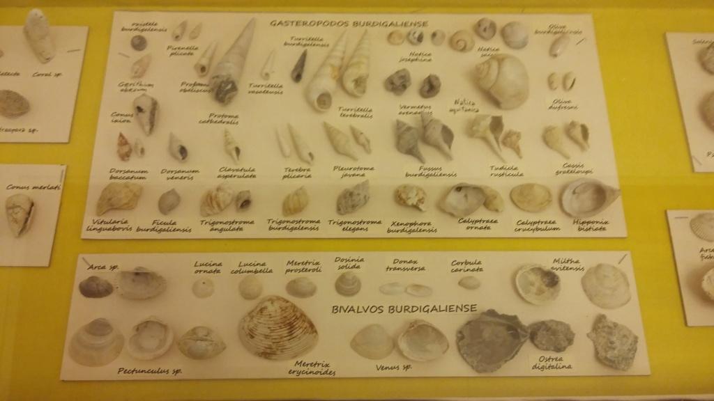 Exposición especies de la transversal pirenaica y algunas cosas más 20181075