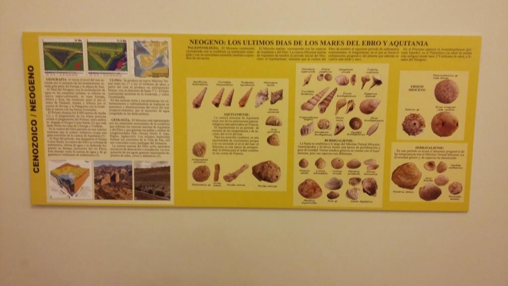 Exposición especies de la transversal pirenaica y algunas cosas más 20181076