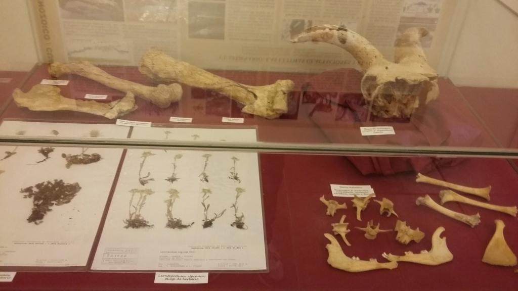 Exposición especies de la transversal pirenaica y algunas cosas más 20181077