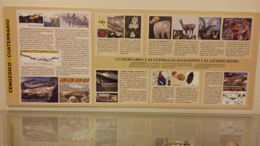 Exposición especies de la transversal pirenaica y algunas cosas más 20181079