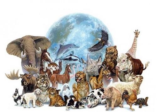 Solidarité pour les animaux en danger Animau10