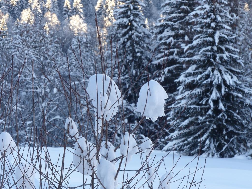 2019/01 - Sortie SnowScoot - 73 Savoie (Espace Diamant). 06_fev53