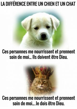 Photos et vidéos de vos animaux ! - Page 36 2020-026