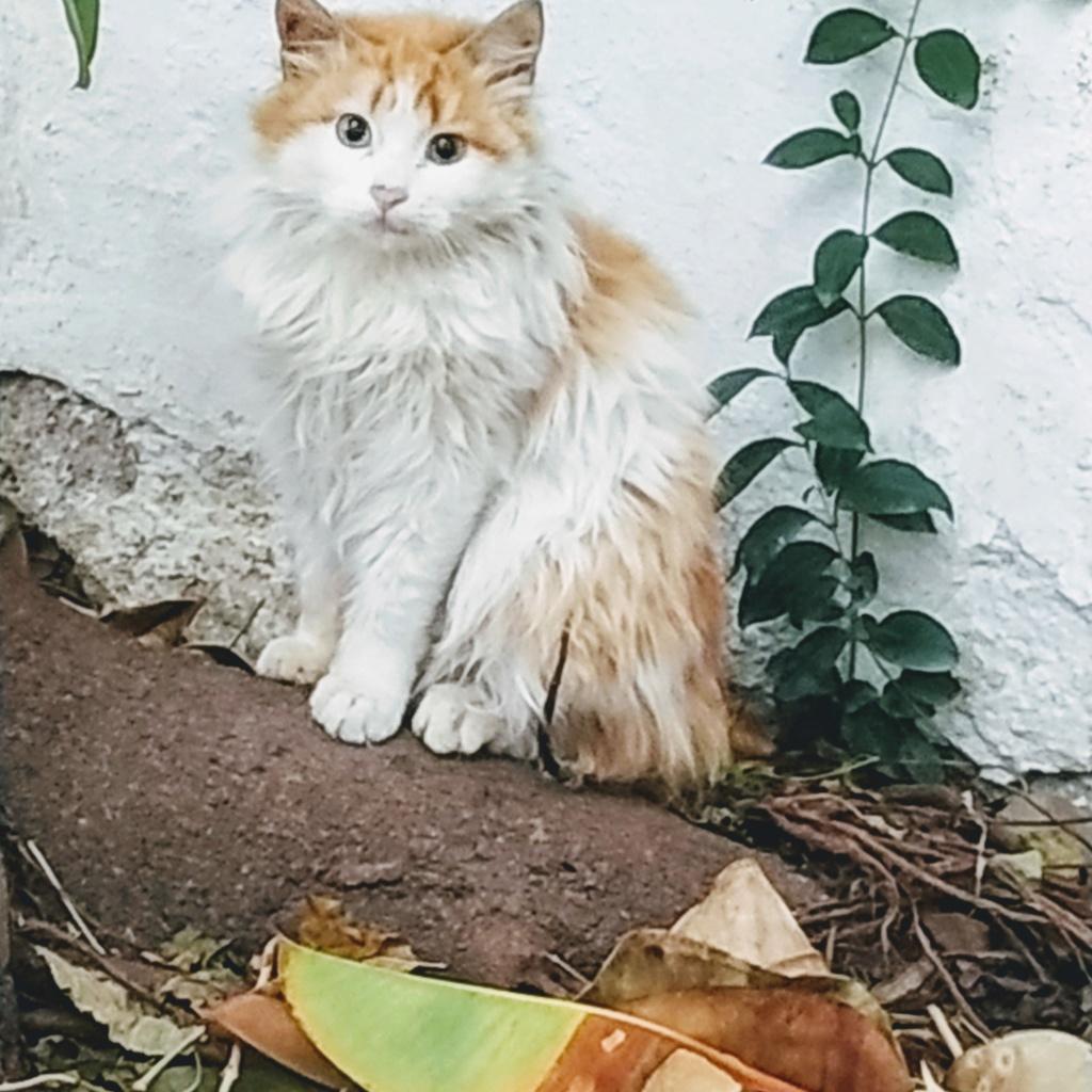 Αδέσποτακι γατάκι που δε πιάνεται με τίποτα.. Img_2016