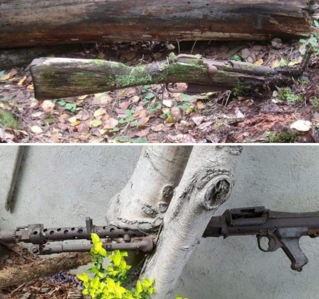 la nature gagne toujours Fb_img10