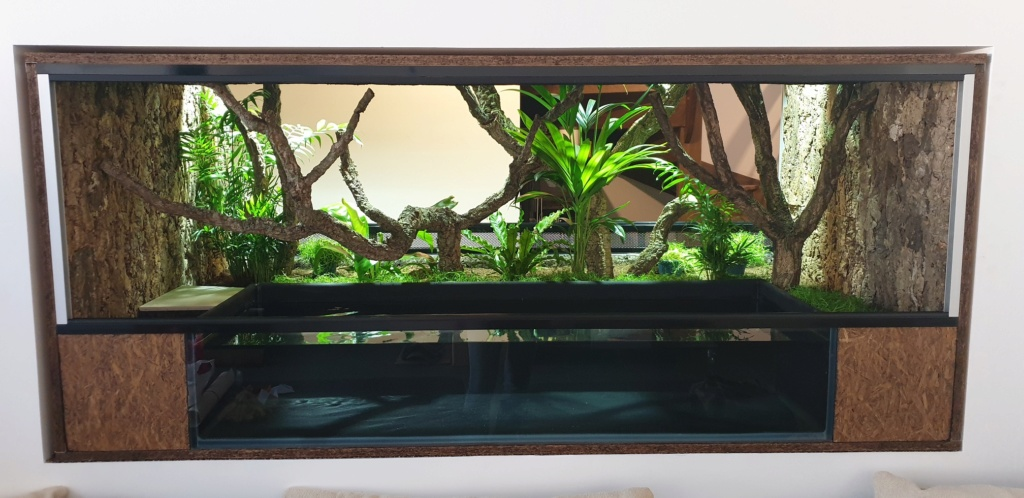 Construction Terrarium tropical humide 20200511