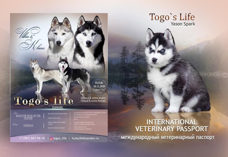 Togo's Life Yason Spark 631b5911