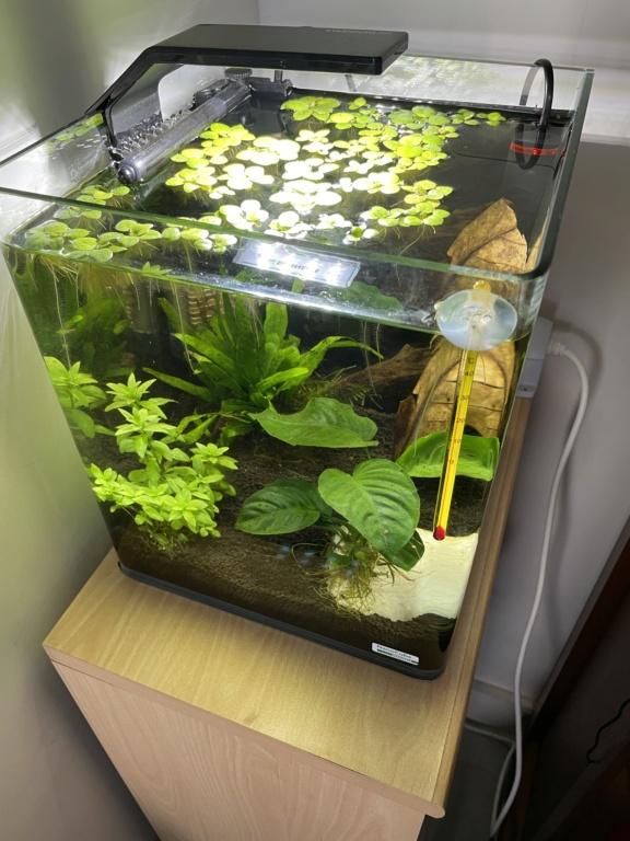 1er aquarium - mauvais paramètres  E4d9c010