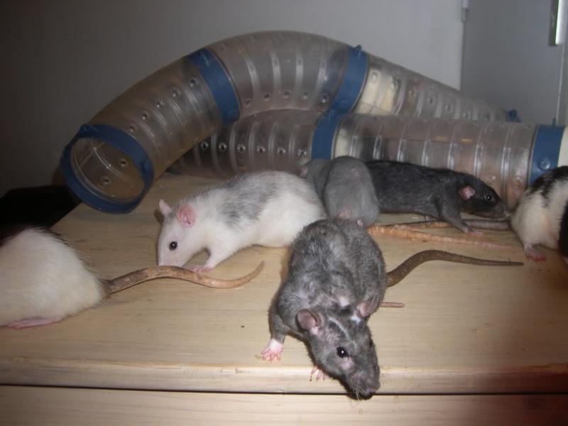 Les ratteries Dscn3010