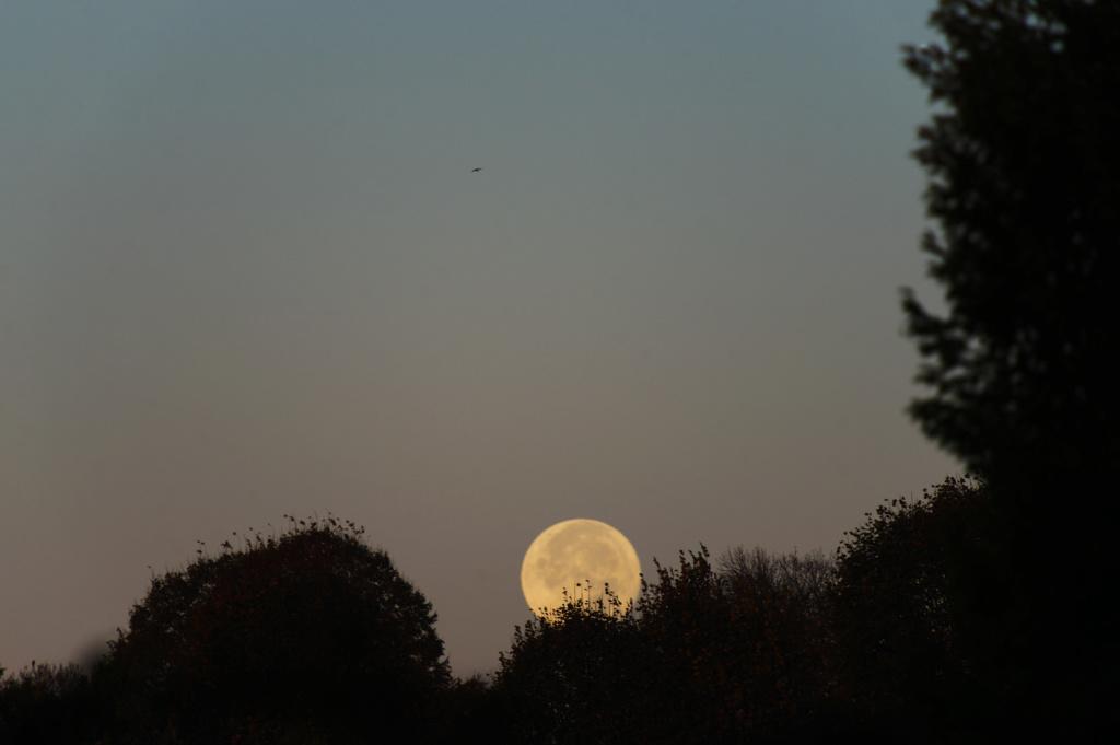 La Lune - Page 12 Dsc06410