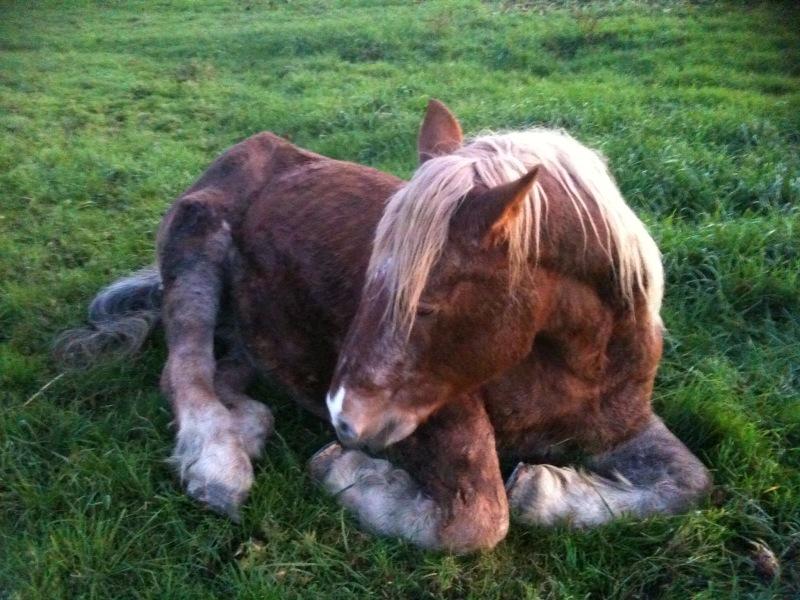 POLKA - cheval de Trait  née en 1984 - adoptée en janvier 2010 par asa  - Page 4 Photo10