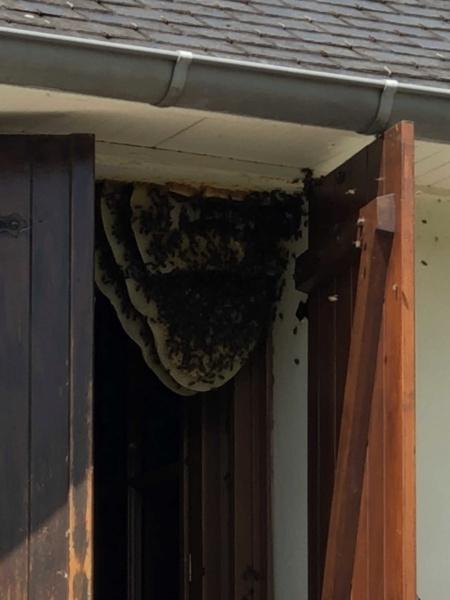 Maya l'abeille Img_9510