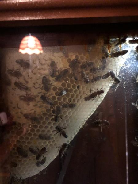 Maya l'abeille Img_9511