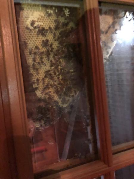 Maya l'abeille Img_9512