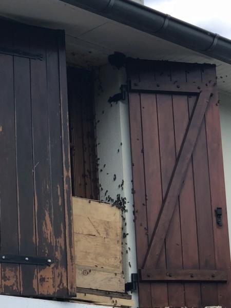 Maya l'abeille Img_9610