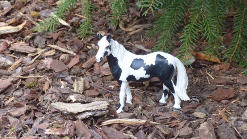 SCHLEICH : mes chevaux, mes dragons et autres figurines P1250619