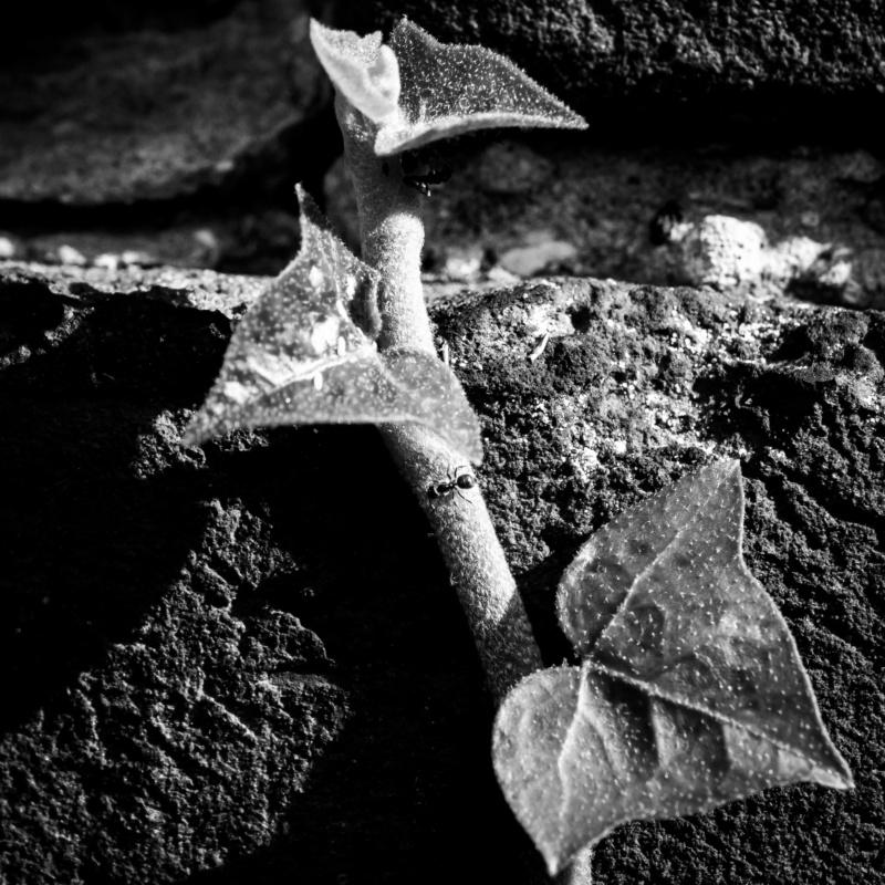 Feuilles de briques _1290411