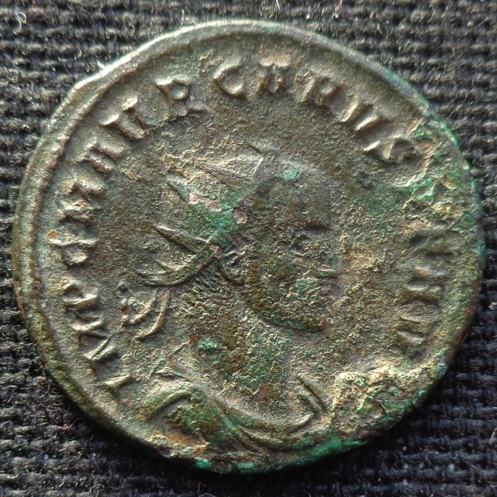 Carus identification Provid11