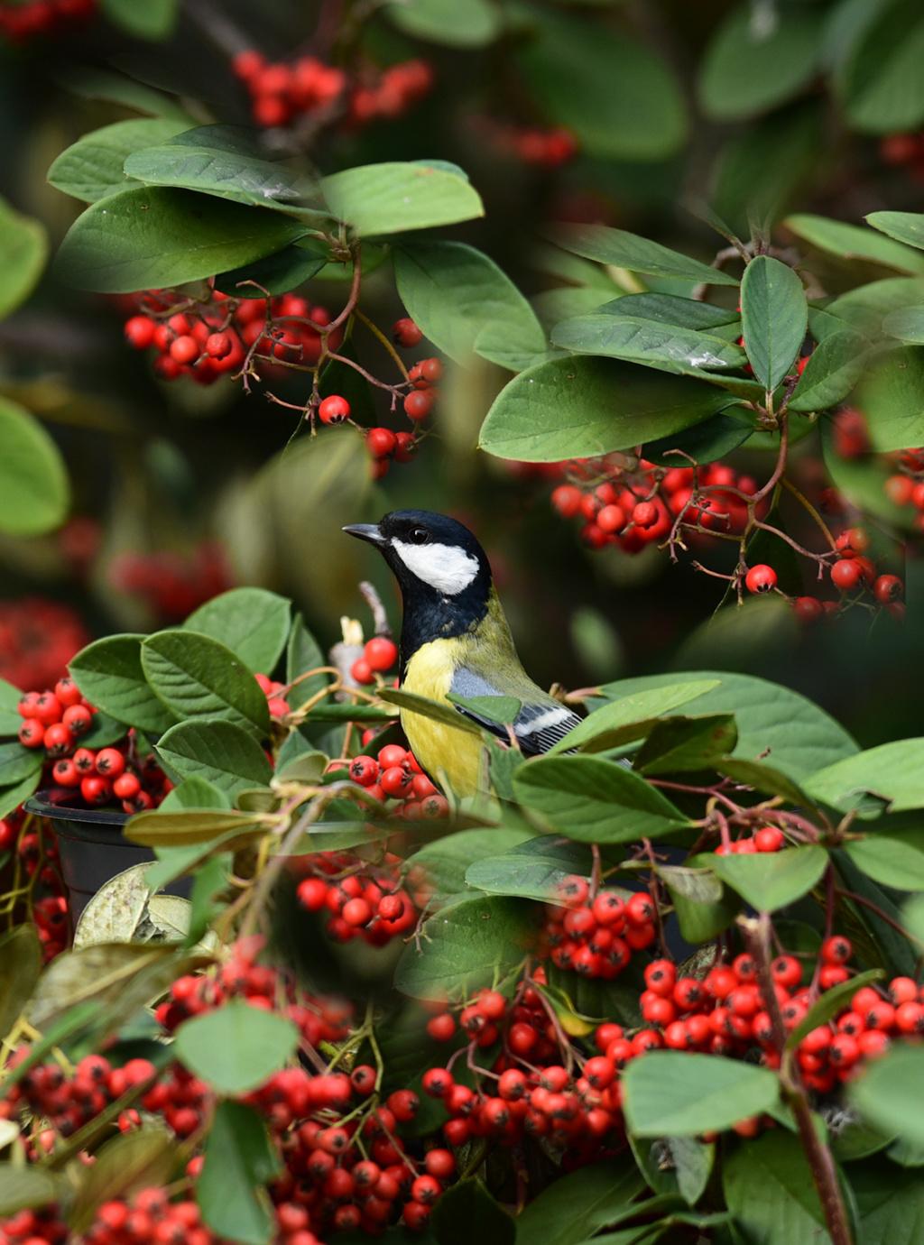 [Ouvert] FIL - Oiseaux. - Page 20 Dans_l10