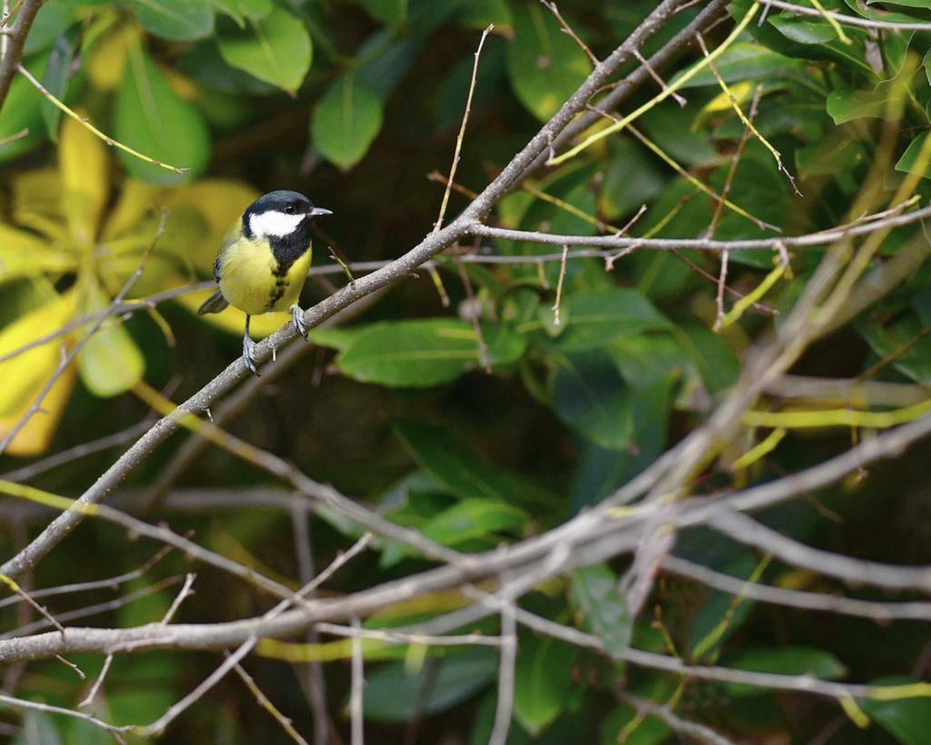 [Ouvert] FIL - Oiseaux. - Page 20 Dsc_0710
