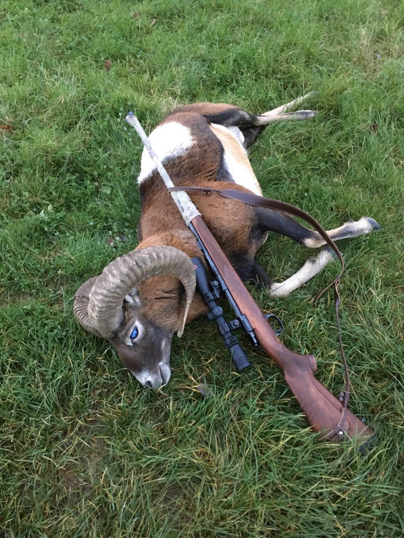 Tête Bizarde d'un Mouflon Allemand Photo_10