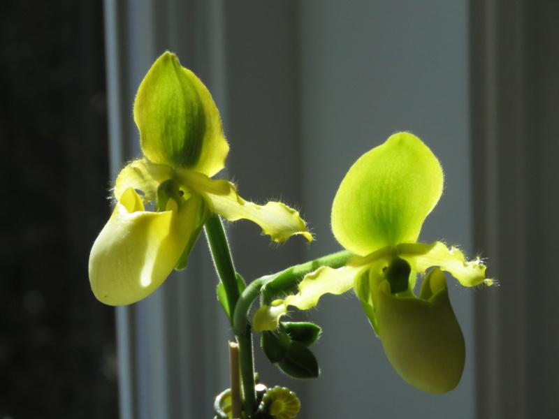 Les orchidées chez Grigri à partir de 2020 - Page 6 Img_0062