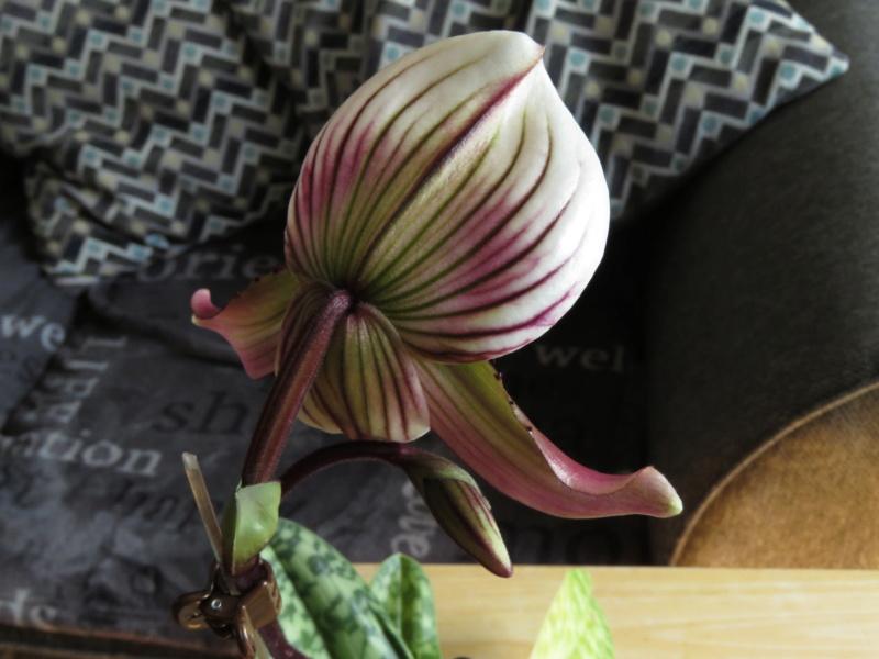 Les orchidées chez Grigri à partir de 2020 - Page 6 Img_0231