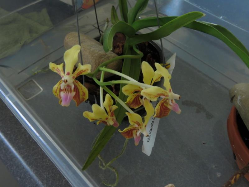Les orchidées chez Grigri à partir de 2020 - Page 6 Img_0235