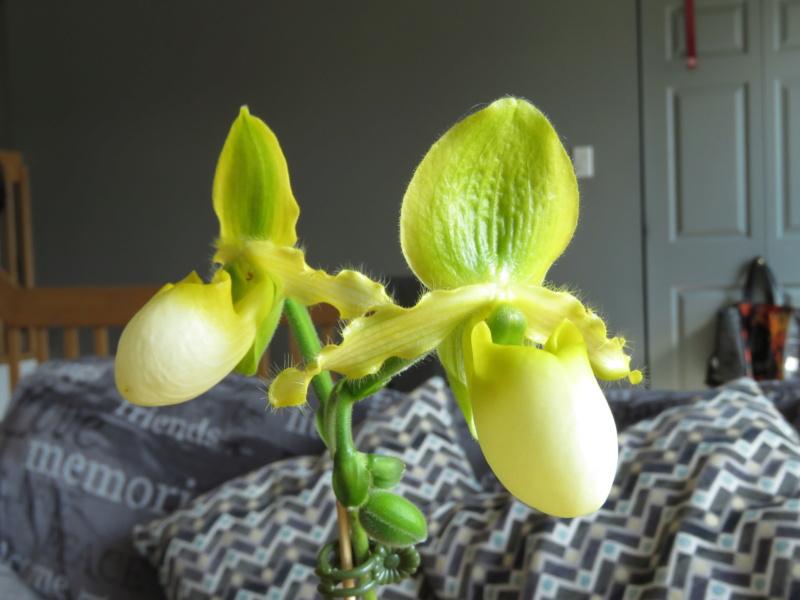 Les orchidées chez Grigri à partir de 2020 - Page 6 Img_0236