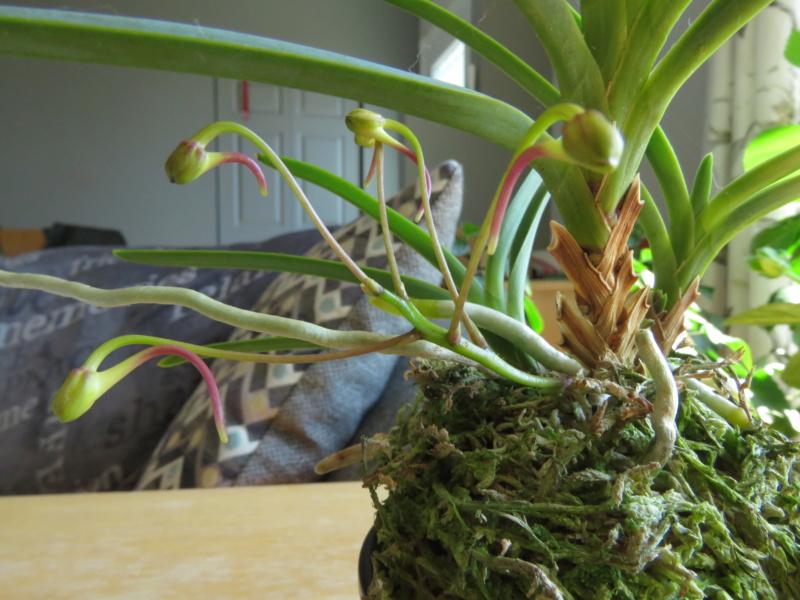 Les orchidées chez Grigri à partir de 2020 - Page 8 Img_0837