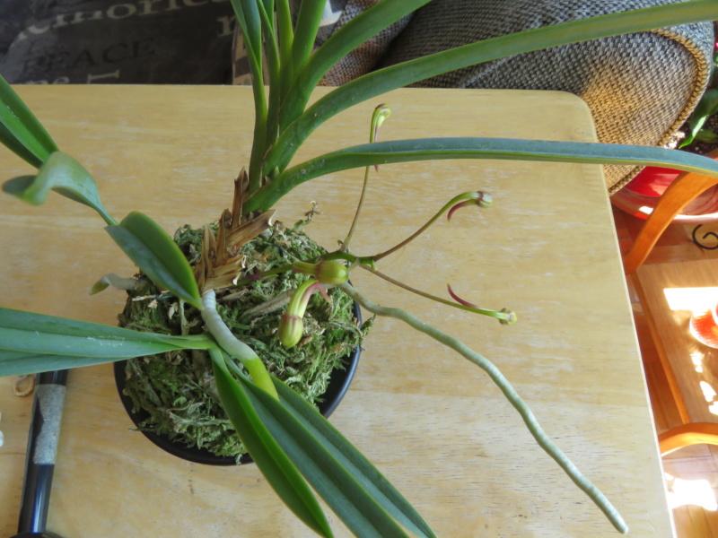 Les orchidées chez Grigri à partir de 2020 - Page 8 Img_0838