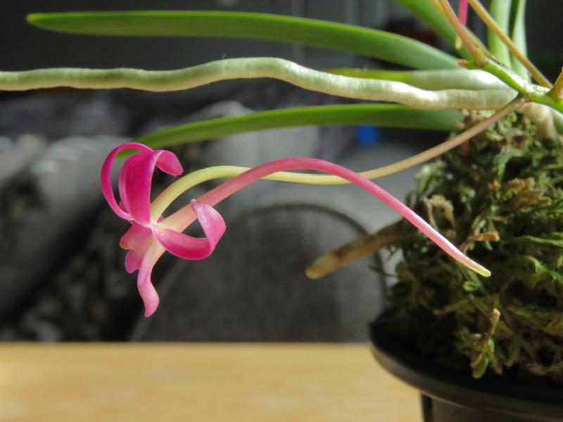 Les orchidées chez Grigri à partir de 2020 - Page 8 Img_1025