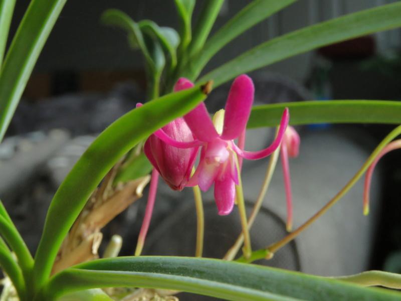 Les orchidées chez Grigri à partir de 2020 - Page 8 Img_1026