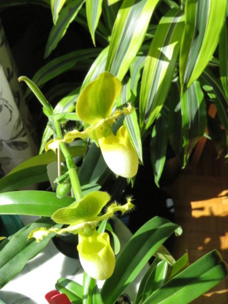 Les orchidées chez Grigri à partir de 2020 - Page 8 Img_1031