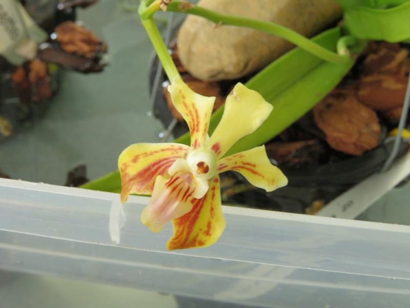 Les orchidées chez Grigri à partir de 2020 - Page 8 Img_1212