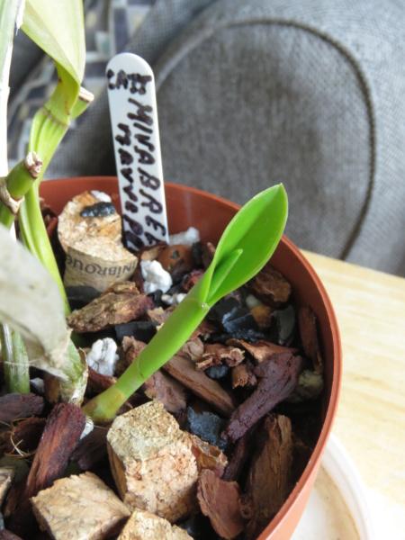 Les orchidées chez Grigri à partir de 2020 - Page 8 Img_1214