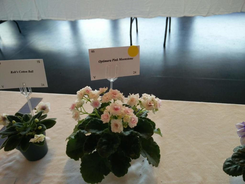 Exposition de violettes africaines Img_2031