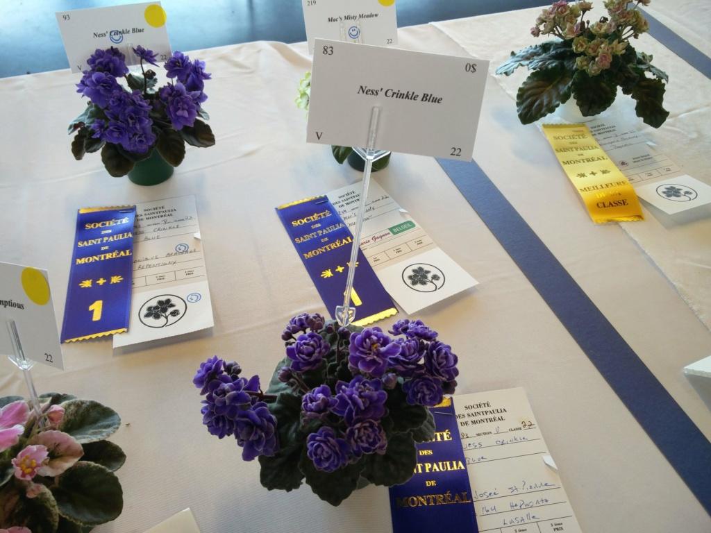 Exposition de violettes africaines Img_2033