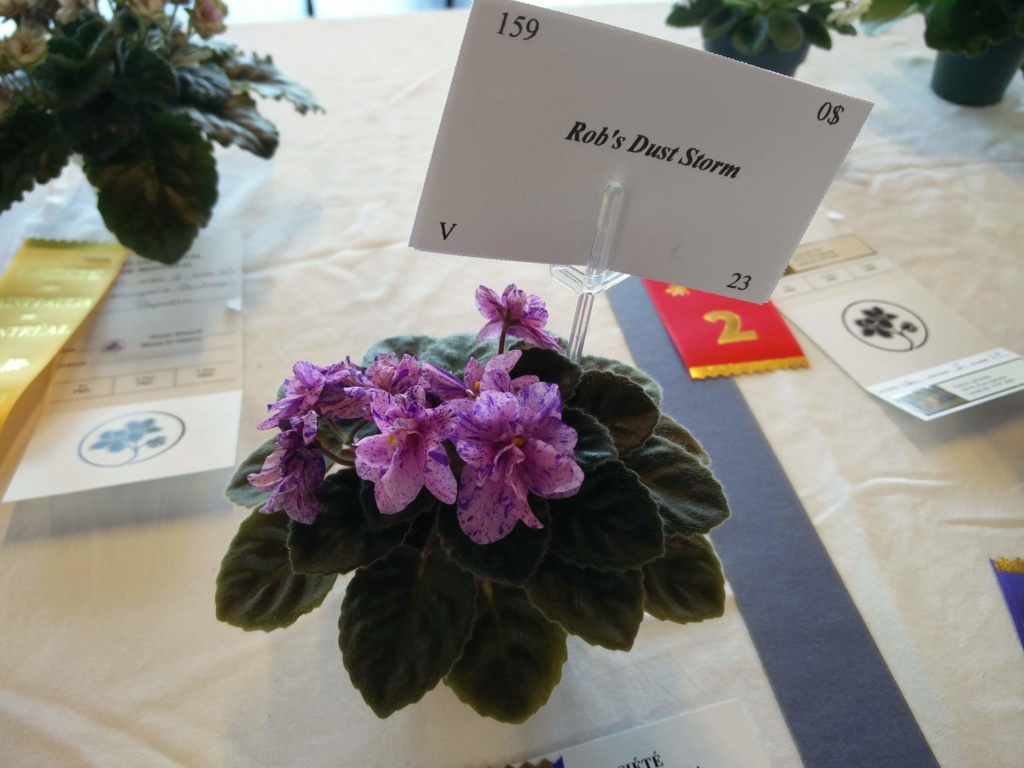 Exposition de violettes africaines Img_2034