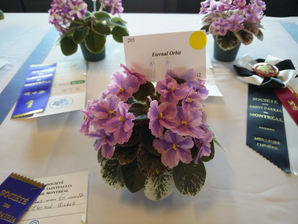 Exposition de violettes africaines Img_2036