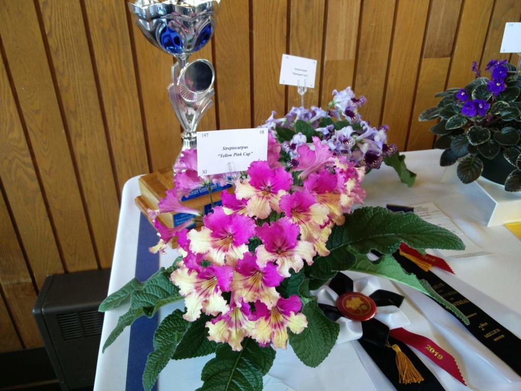 Exposition de violettes africaines Img_2038