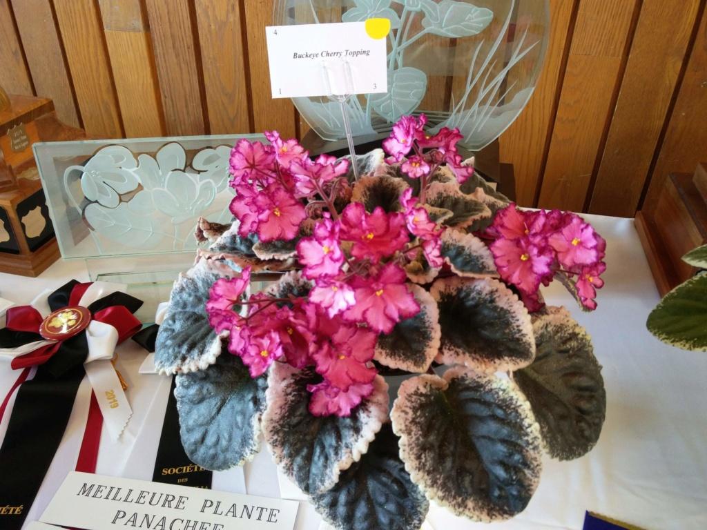 Exposition de violettes africaines Img_2039