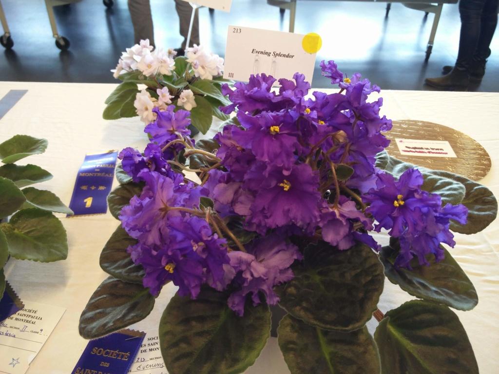 Exposition de violettes africaines Img_2041