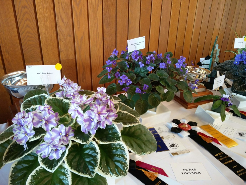 Exposition de violettes africaines Img_2042