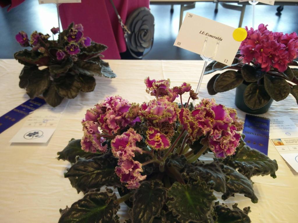 Exposition de violettes africaines Img_2045