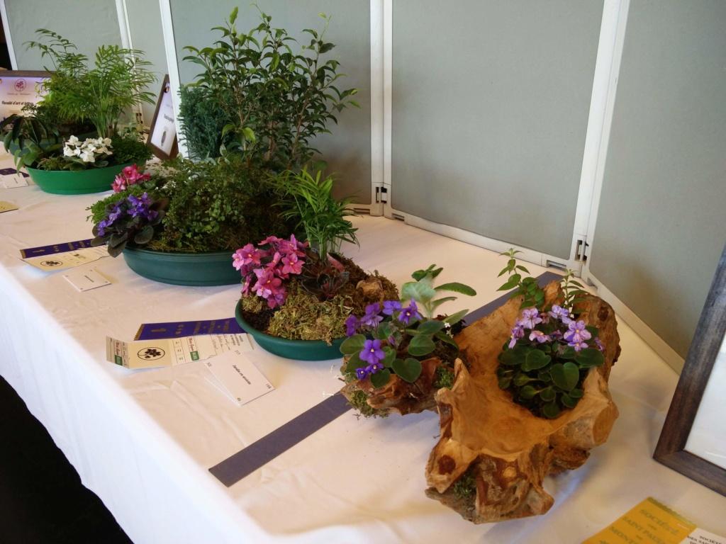 Exposition de violettes africaines Img_2047